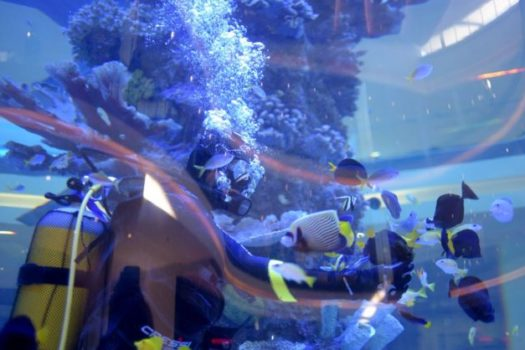 MUCH ANTICIPATED CREST AQUARIUM OPENS IN CRESTA MALL